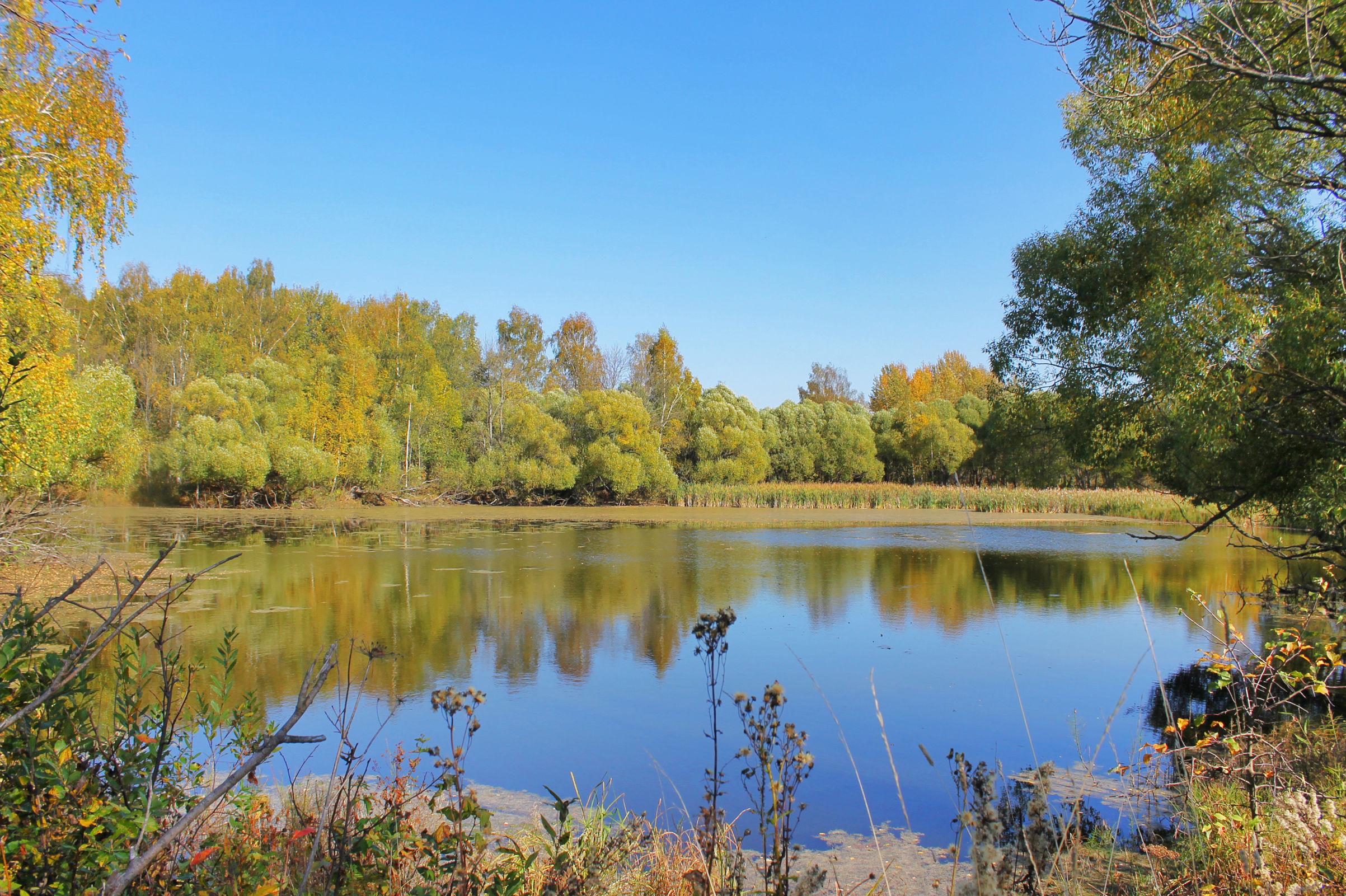 В Ярославской области в пруду обнаружили автомобиль с двумя погибшими