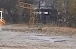 В Ярославле лисица бегала по школьной территории