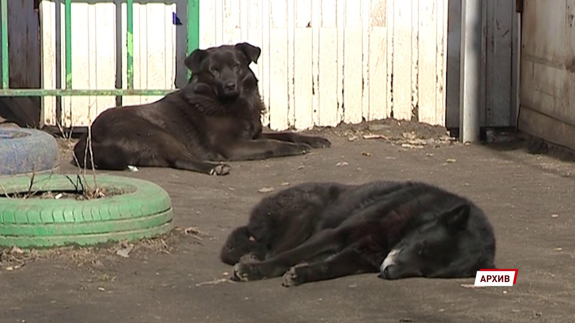 Бездомных псов из Переславля-Залесского вакцинируют в Московской области
