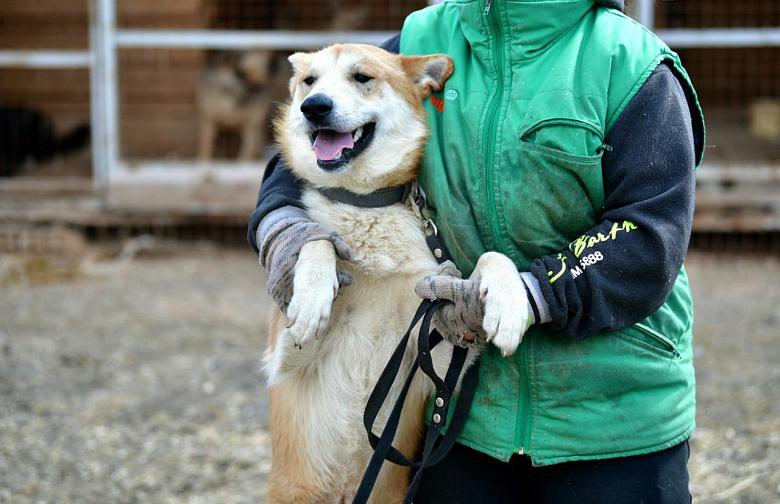 Они ждут хозяев: в Ярославле прошла акция-раздача бездомных животных