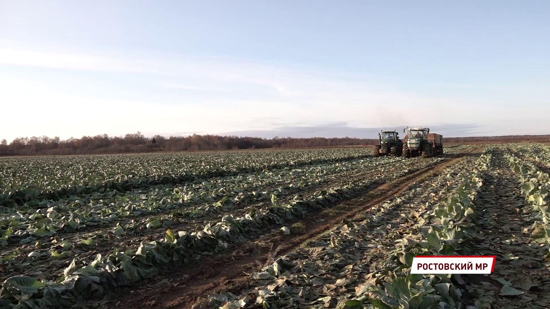Аграрии Ярославской области распахали и засеяли 280 тысяч гектаров земли