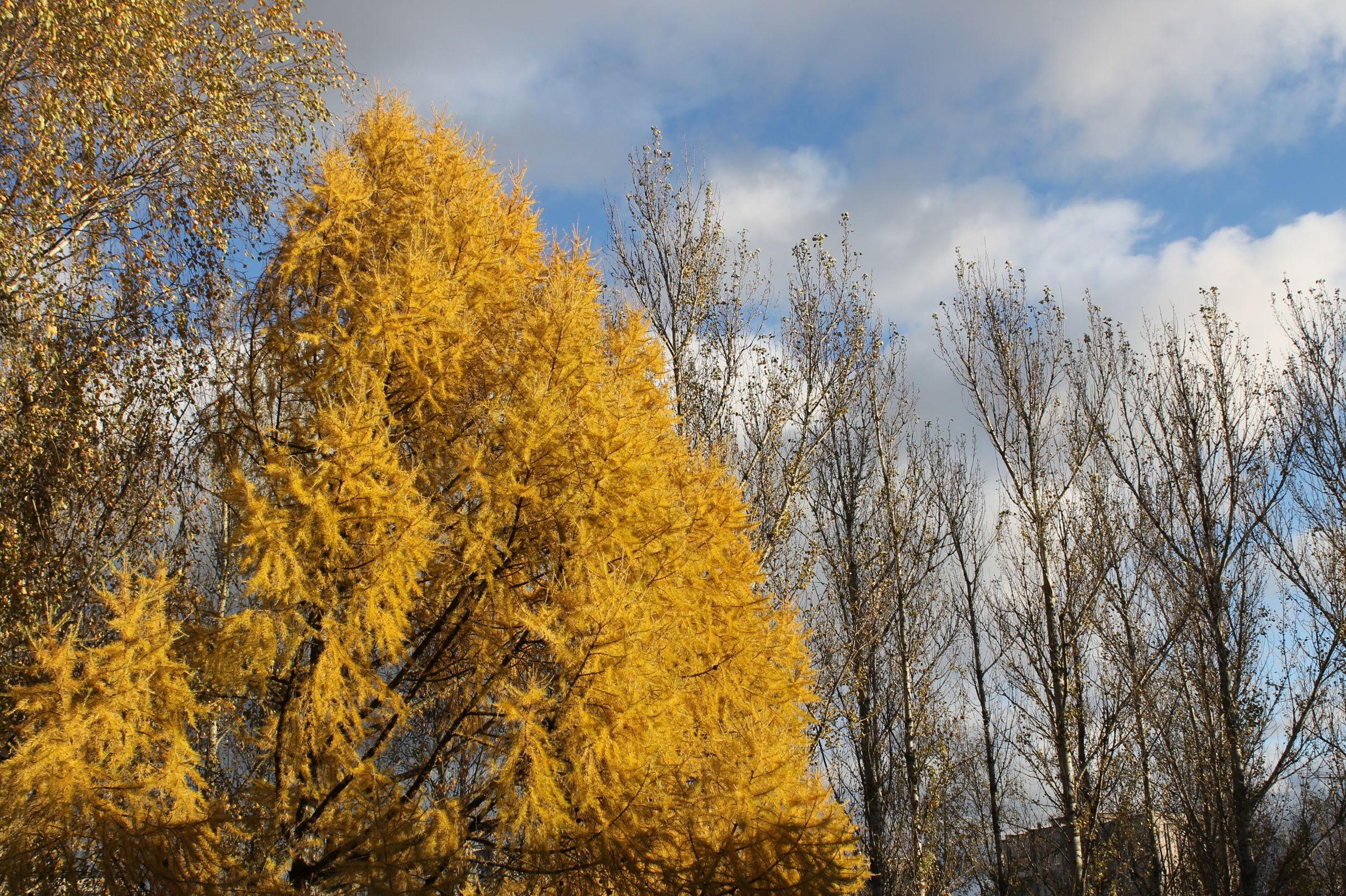 Синоптики рассказали, как долго продержится тепло в Центральной России