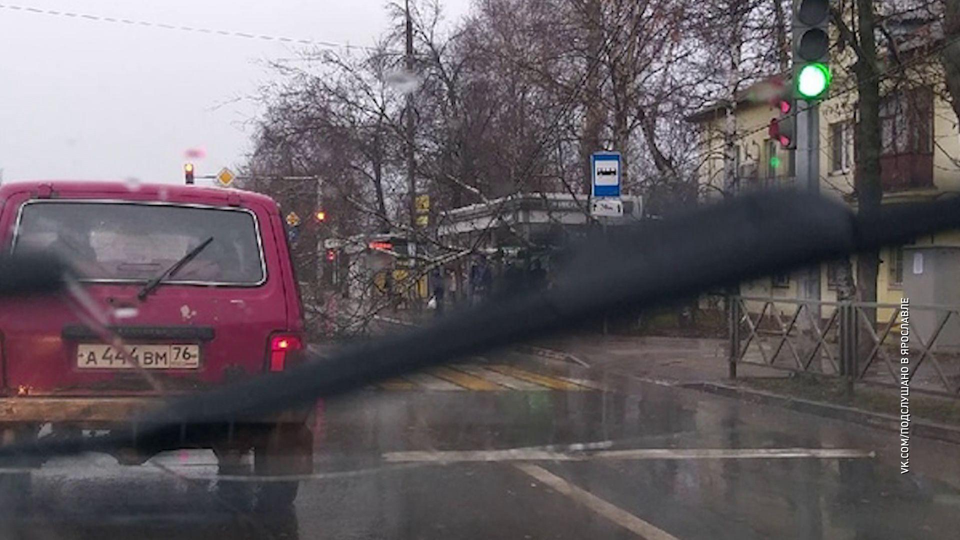 В Заволжском районе береза упала на остановку
