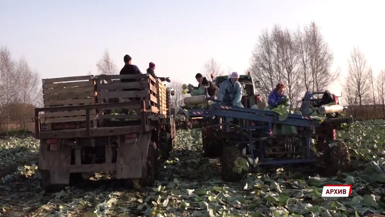 Ярославская область лидирует в ЦФО по государственной поддержке аграриев
