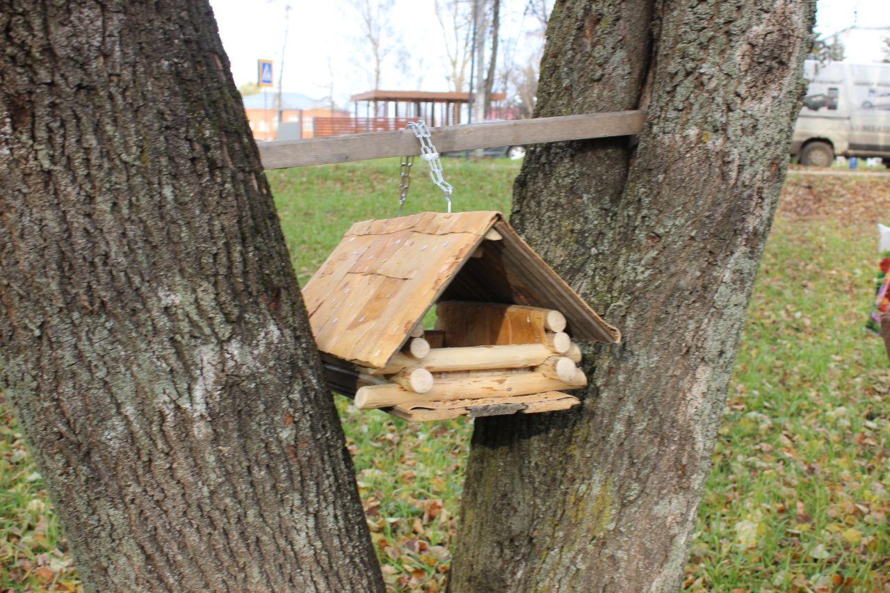 Более 500 школьников в Ярославской области занимаются в лесничествах
