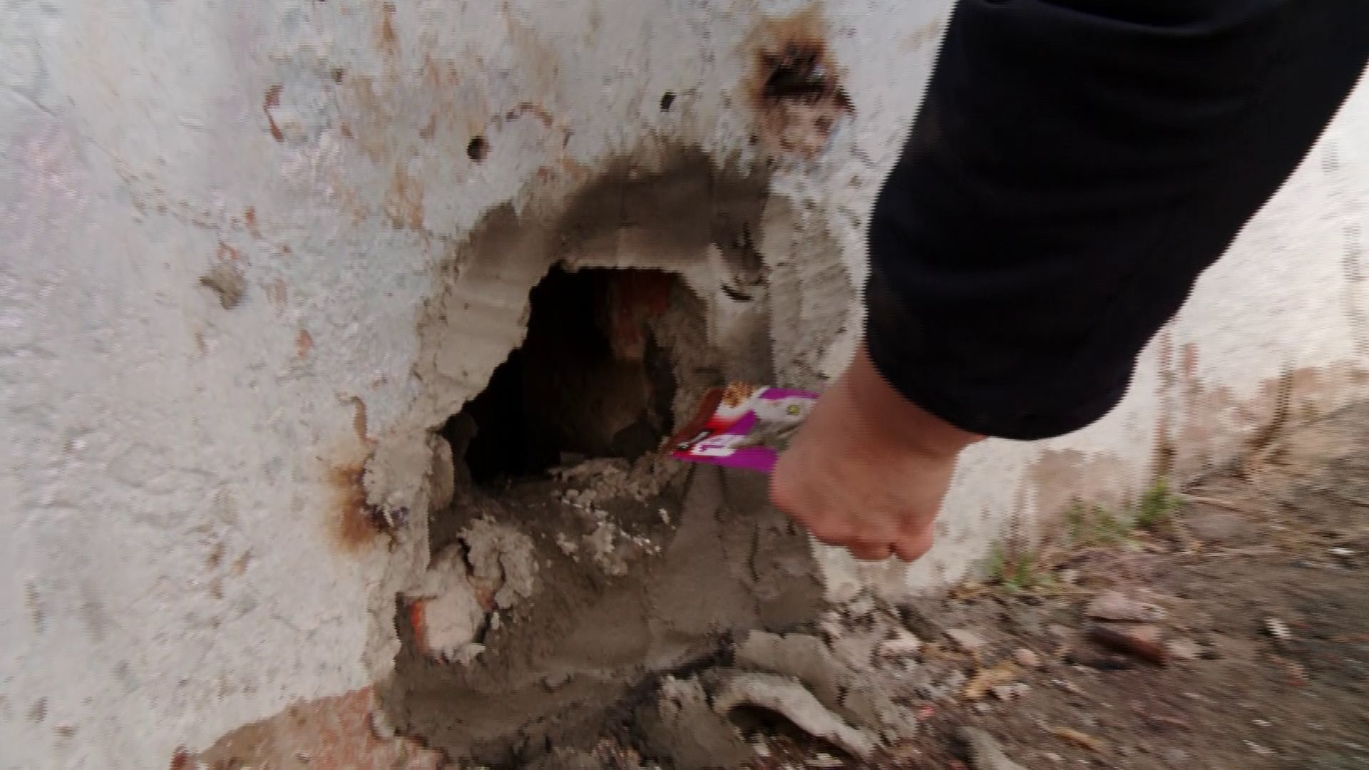 Во Фрунзенском районе в подвале закрыли десять кошек