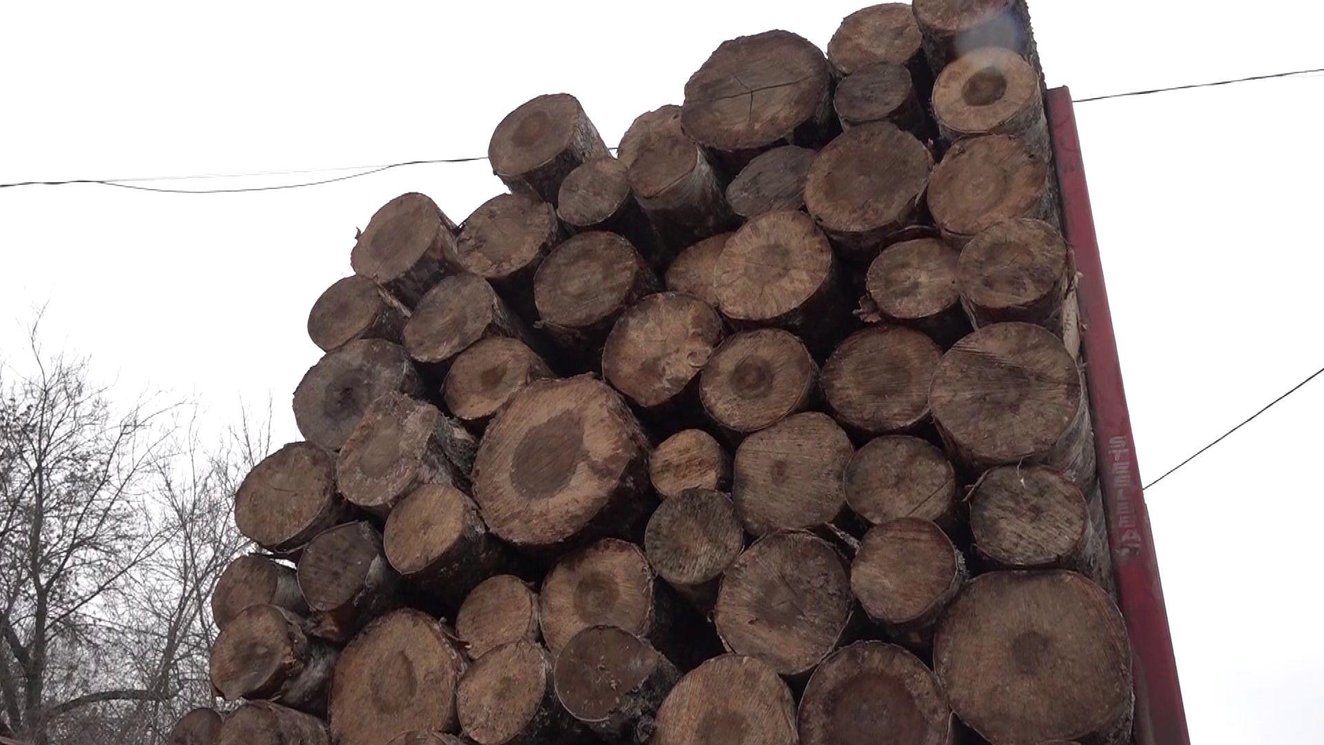 Лесные инспекторы провели очередной рейд по проверке лесовозов