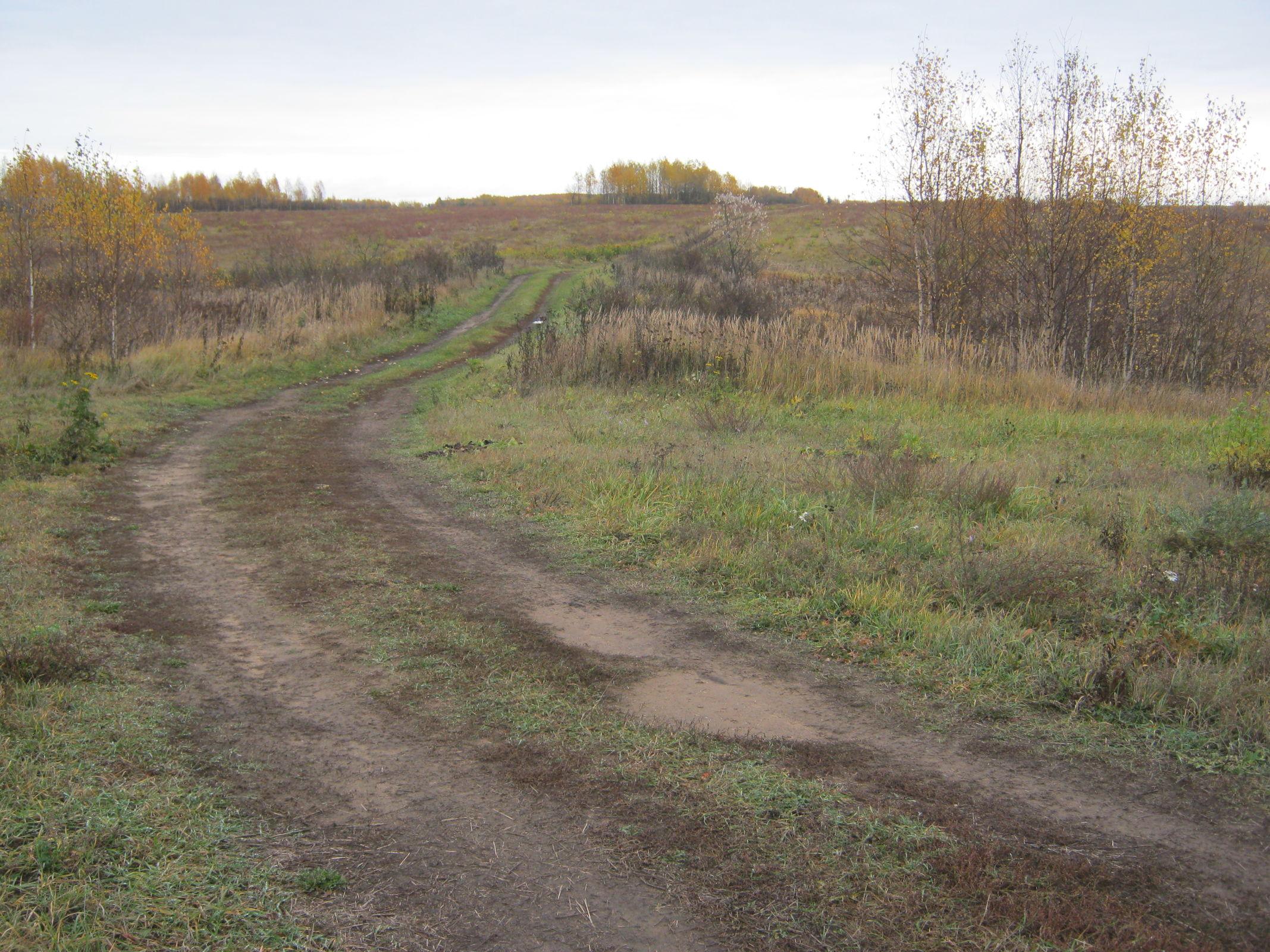В Ярославской области близ населенного пункта на беременную женщину напал волк