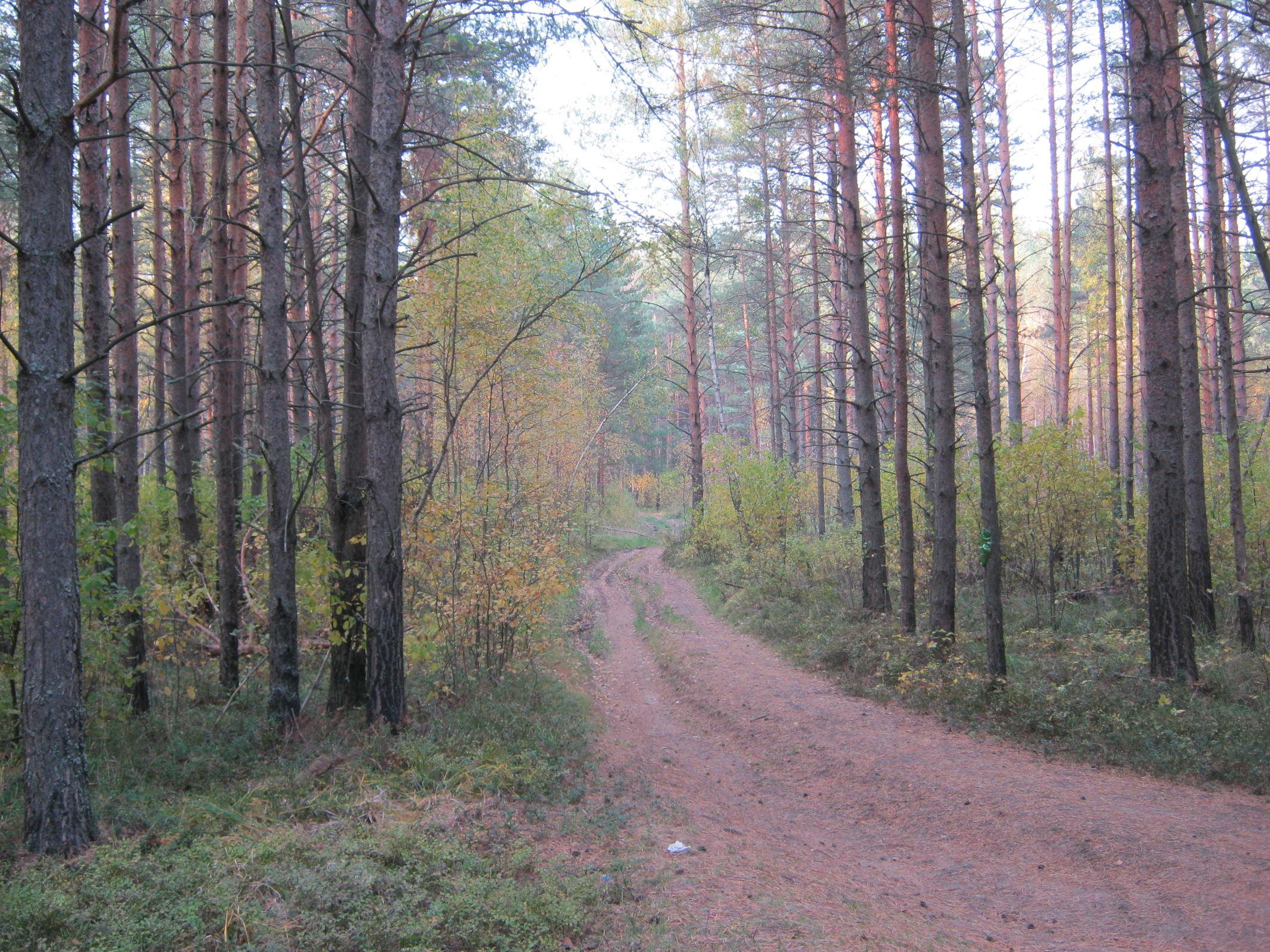 Более чем на 12 тысячах гектаров в Ярославской области провели работы по уходу за лесными культурами