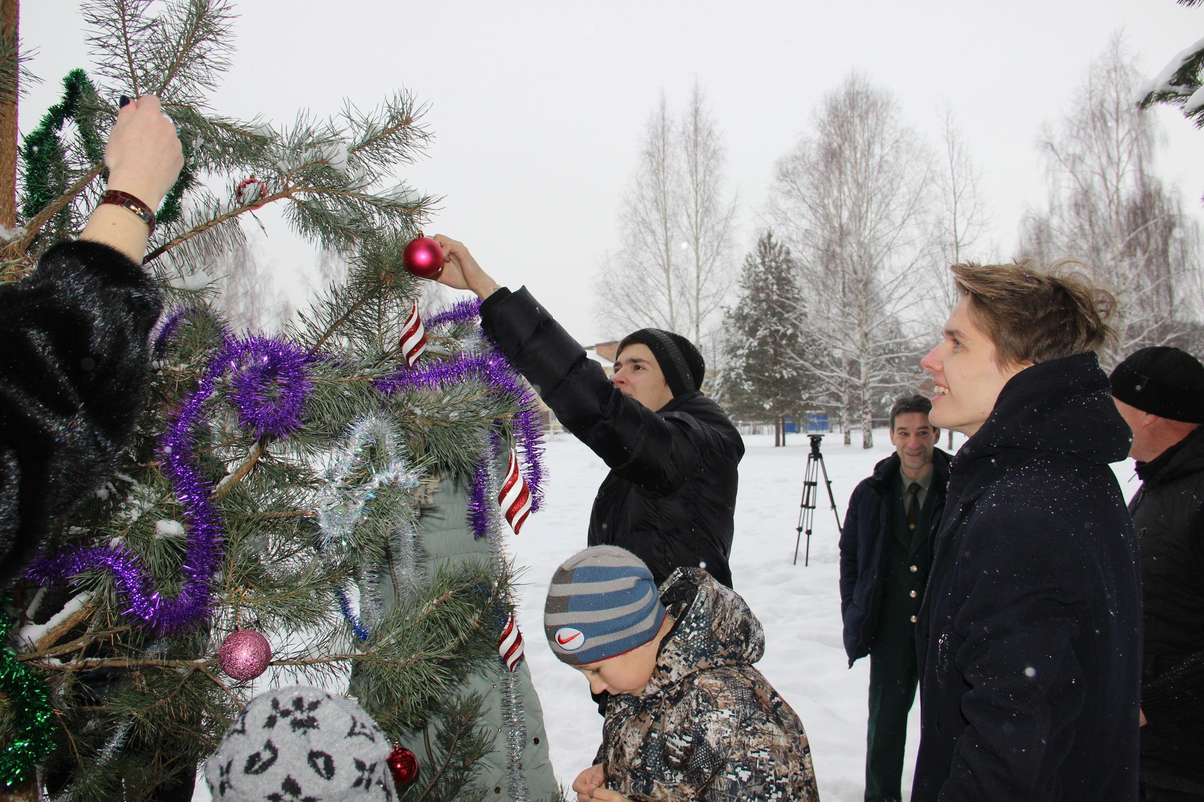 Ярославцев призывают принять участие в акции «Елочка живи!»