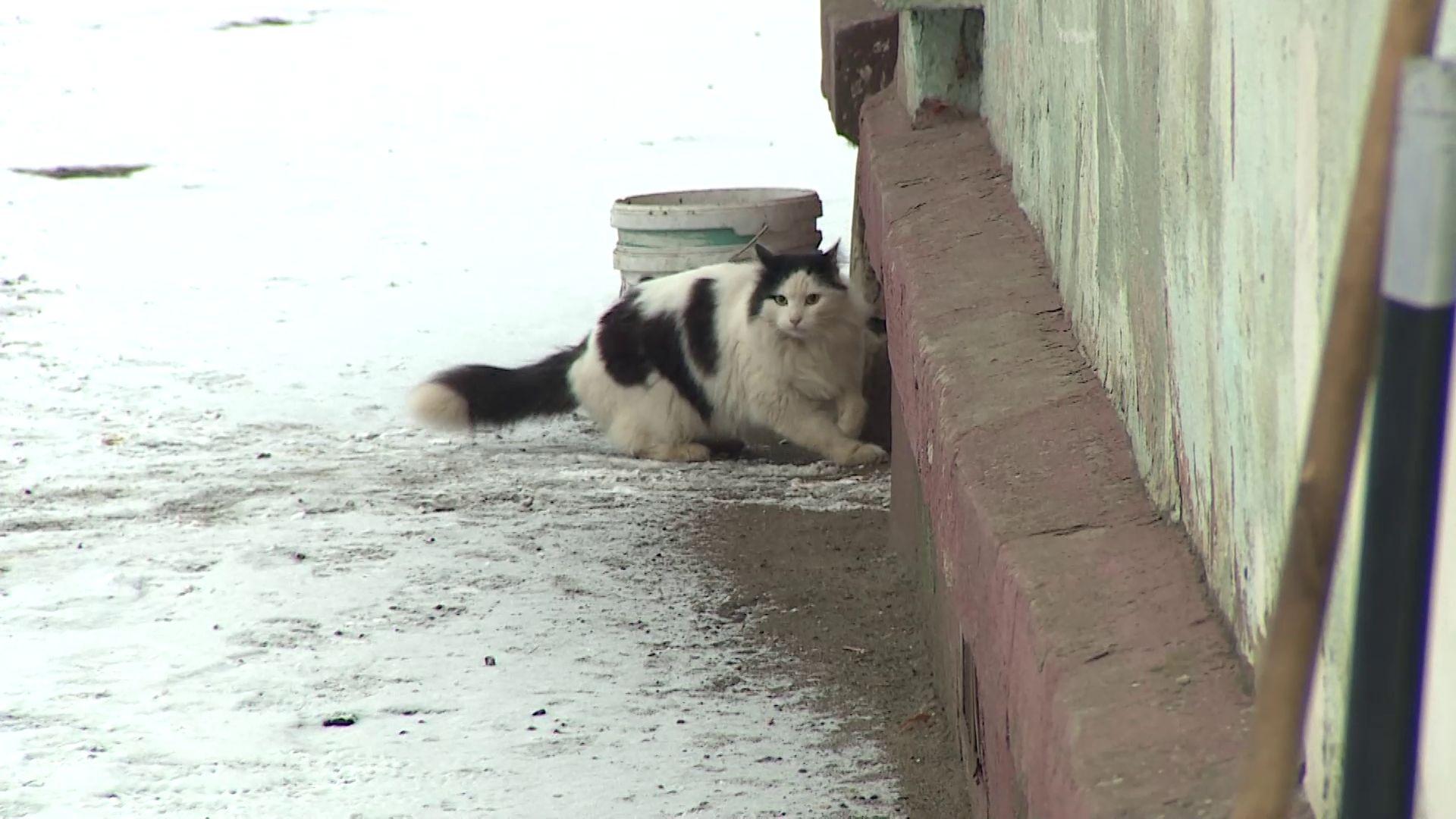 Более ста спасенных животных: ярославна заботится о бездомных собаках и кошках