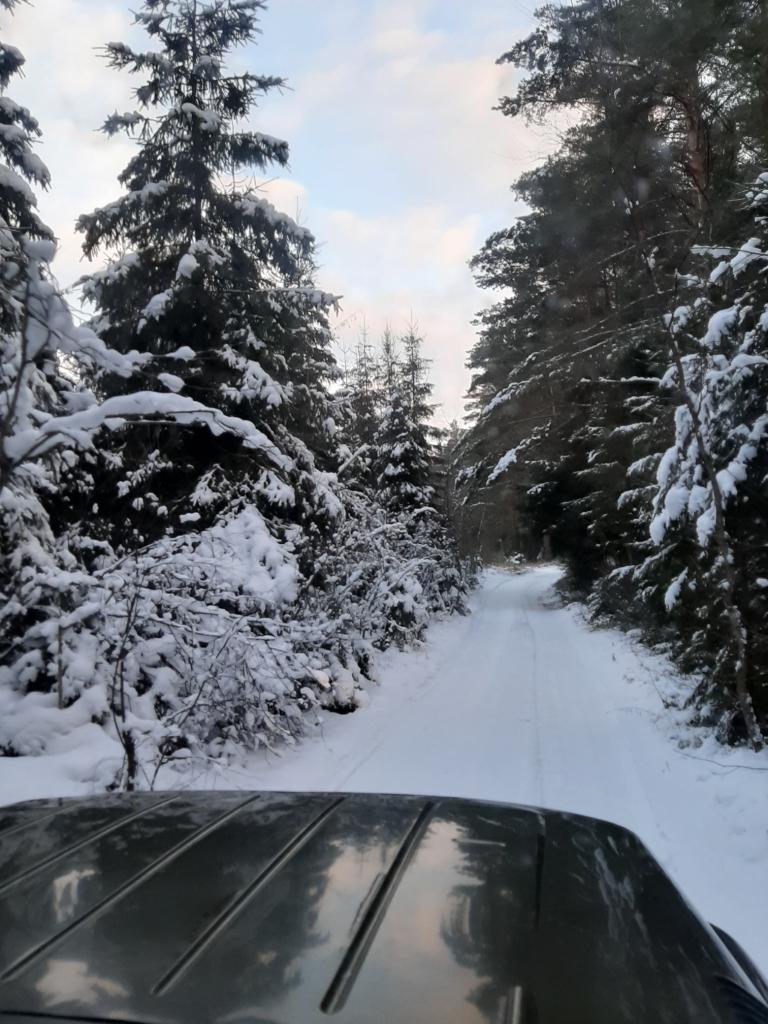 За незаконную вырубку елок будут штрафовать на полмиллиона: в лесах Ярославской области началось усиленное патрулирование