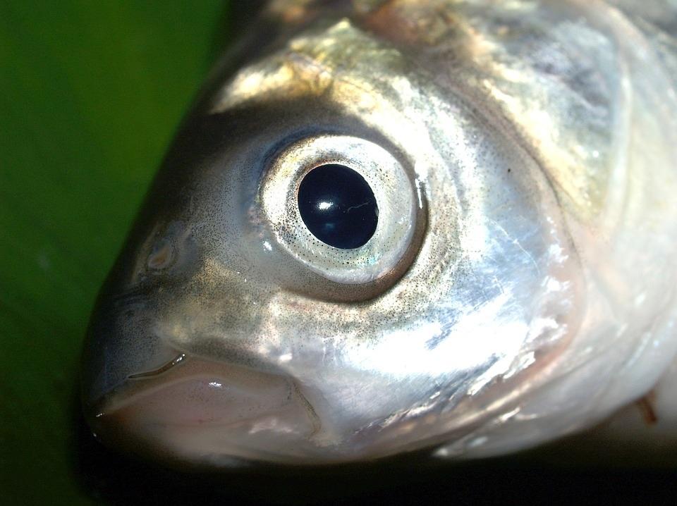 Ярославская область планирует увеличить объемы экспорта рыбы