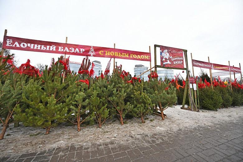 В Ярославле работают десять елочных базаров