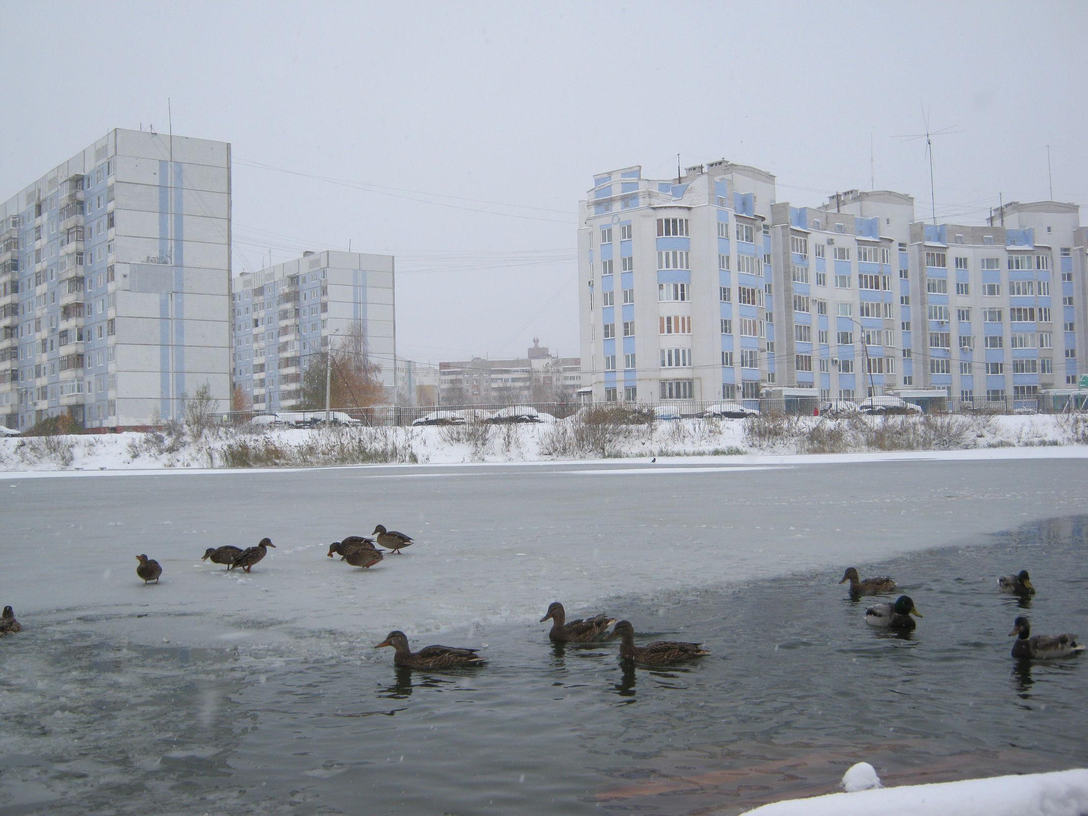 В последние дни года сначала ударит мороз, а затем он сменится оттепелью