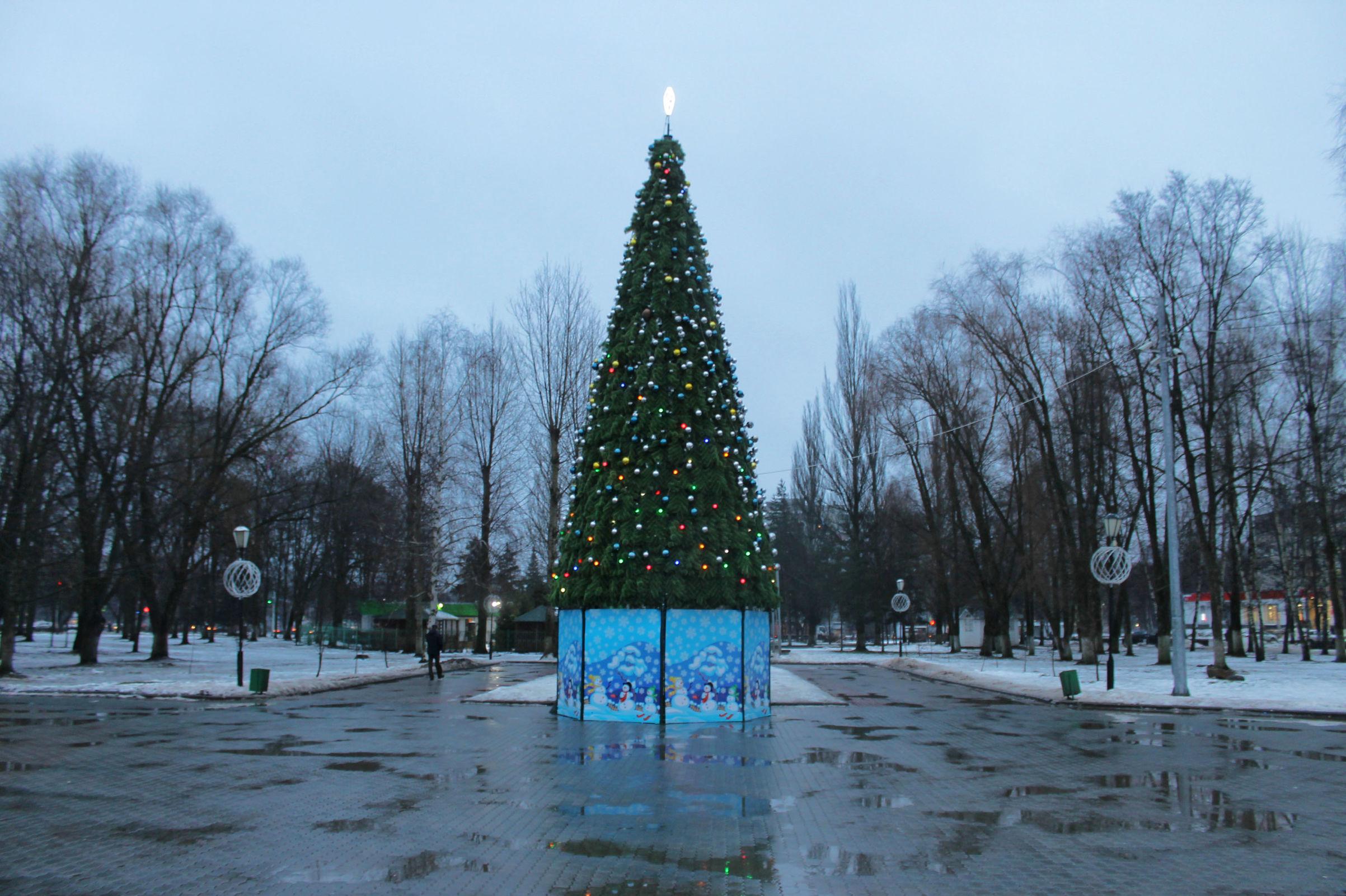 Циклон «Белла» может принести в Ярославль дожди и ледяные дожди в Новый год
