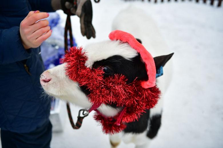 Настроение ярославцам в каникулы поднимет символ наступившего года бычок Борька