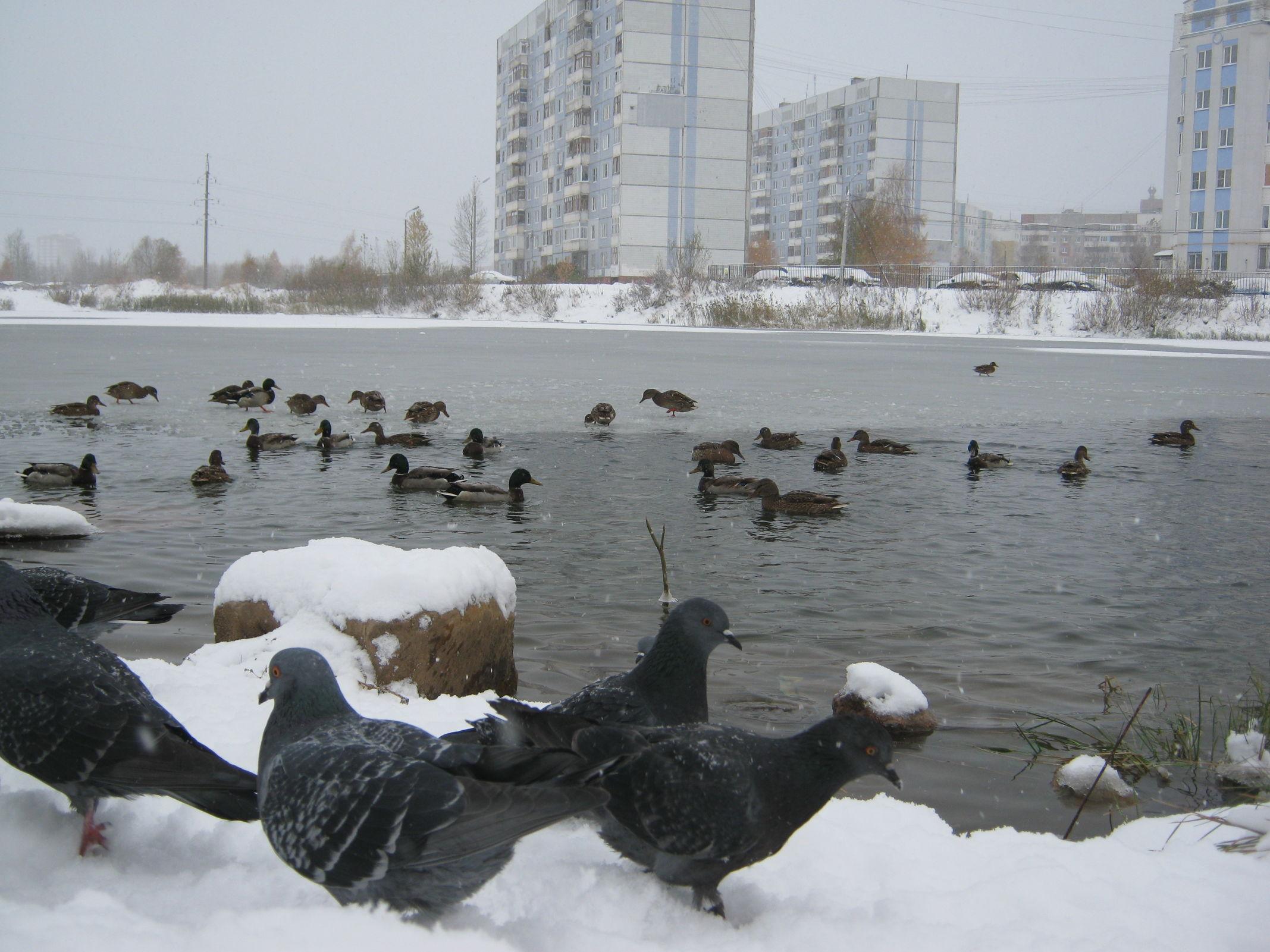 Рождественские морозы отменяются: Гидрометцентр спрогнозировал «мягкую зиму» в январе