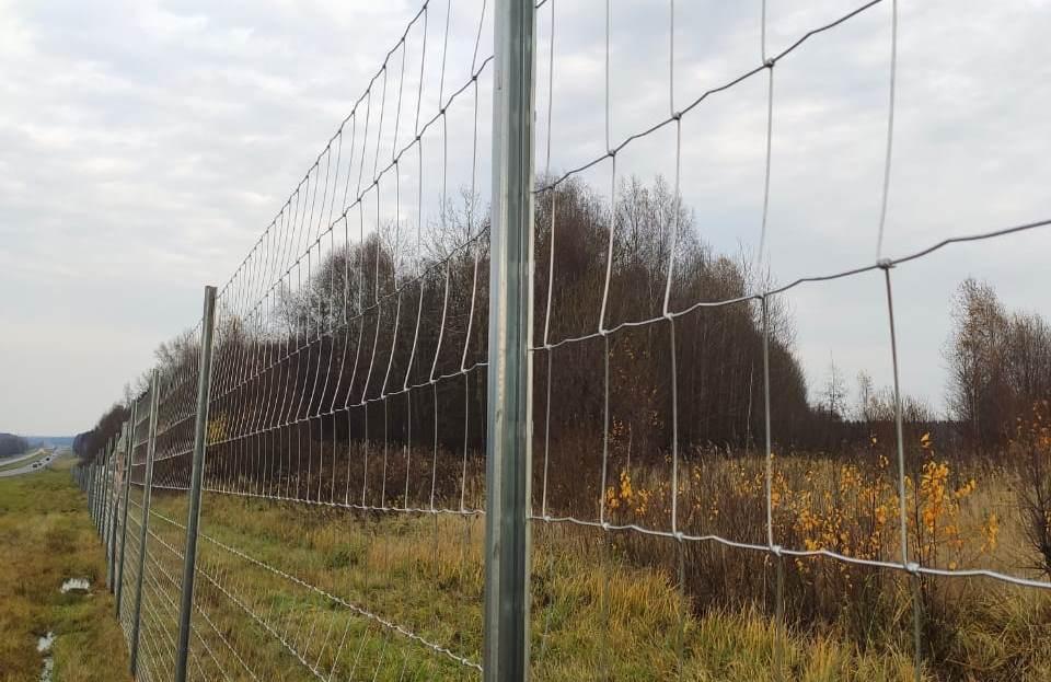 В Ярославской области ведутся работы по предотвращению ДТП с дикими животными