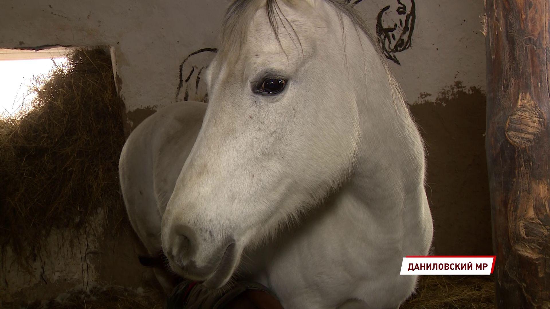Ярославское общество защиты животных получило очередной президентский грант