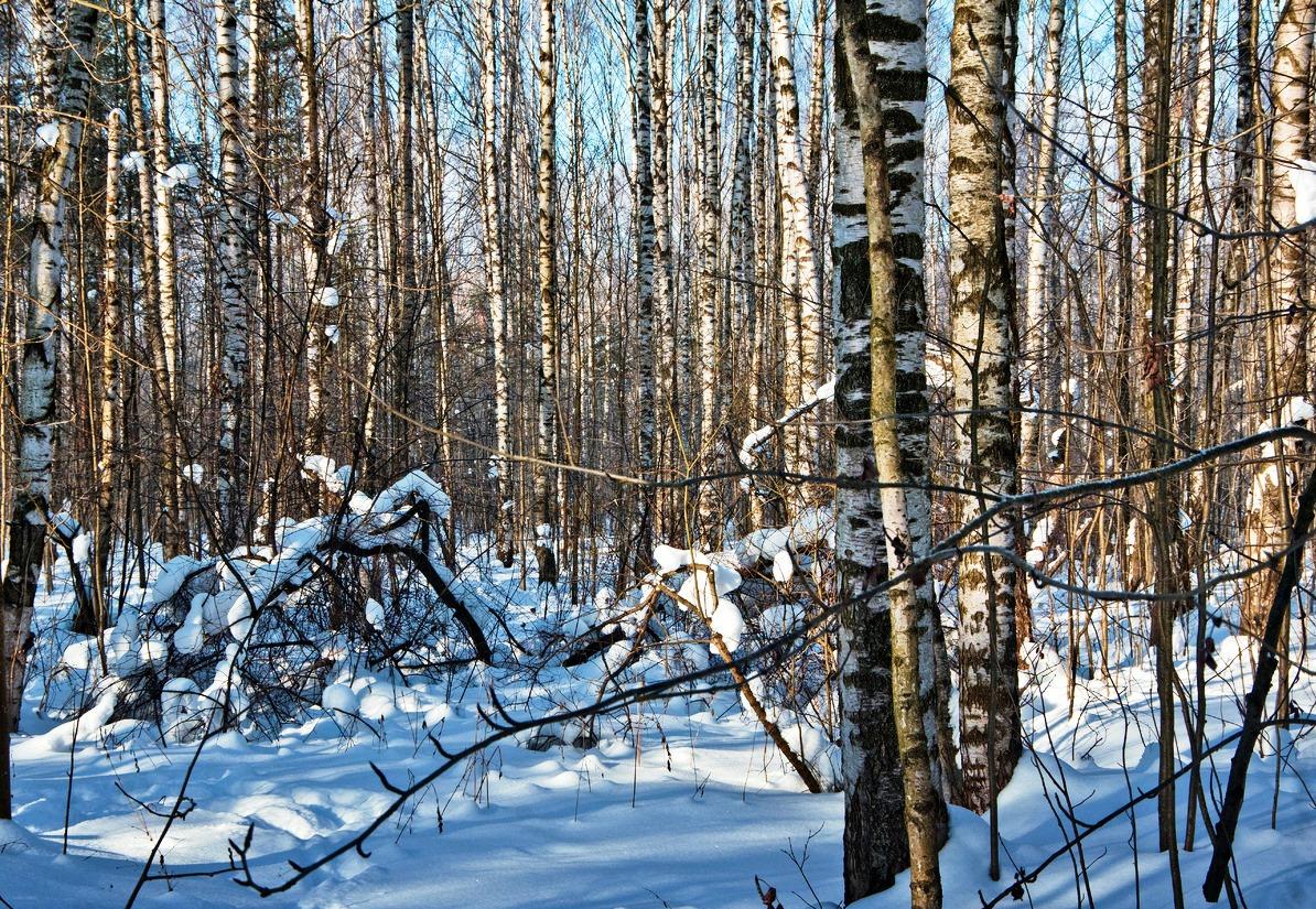 В Ярославской области планируют внести изменения в правила сбора валежника