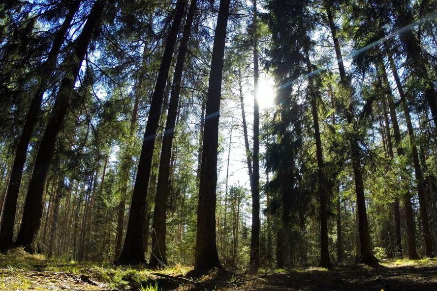 В бюджеты всех уровней за использование ярославских лесов за год поступило около 280 миллионов рублей