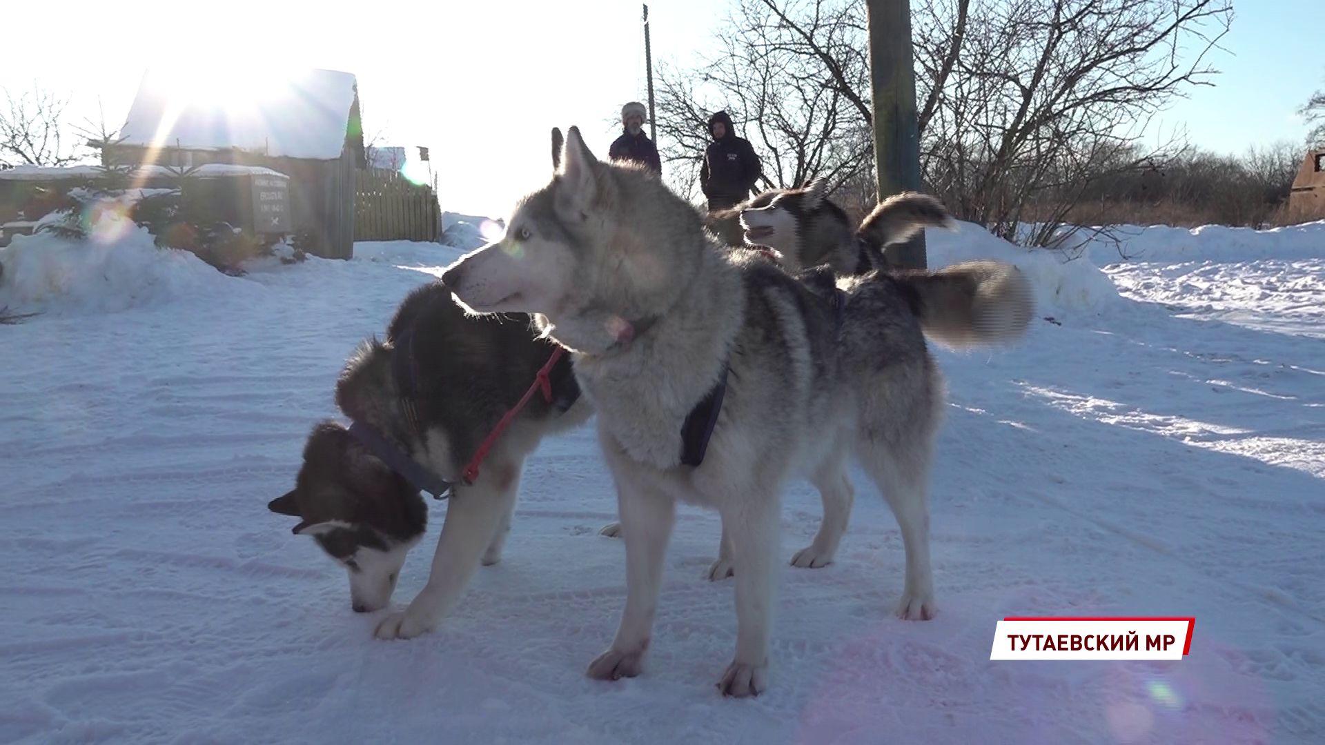 День ездовых собак задумывался как дань памяти событиям почти вековой давности