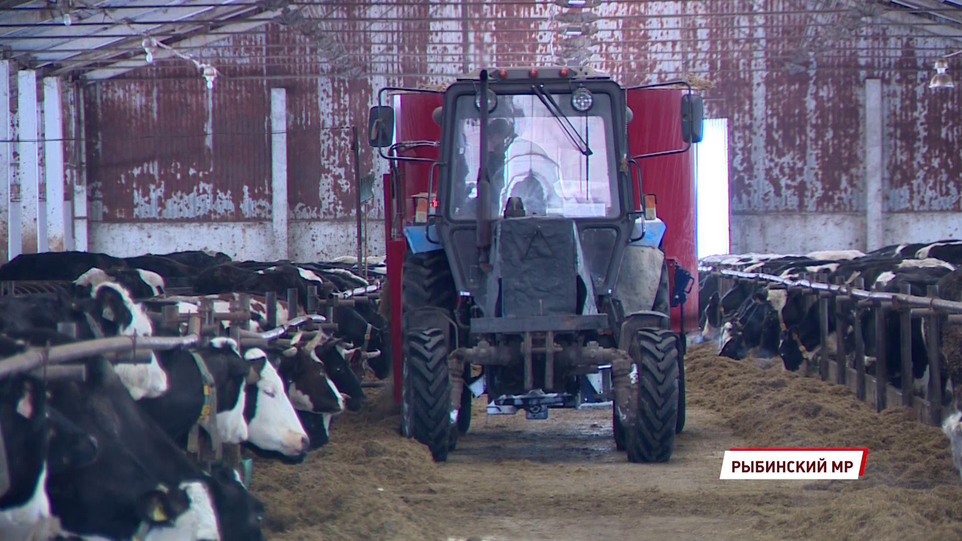 В Ярославской области увеличится грантовая поддержка малых форм хозяйствования