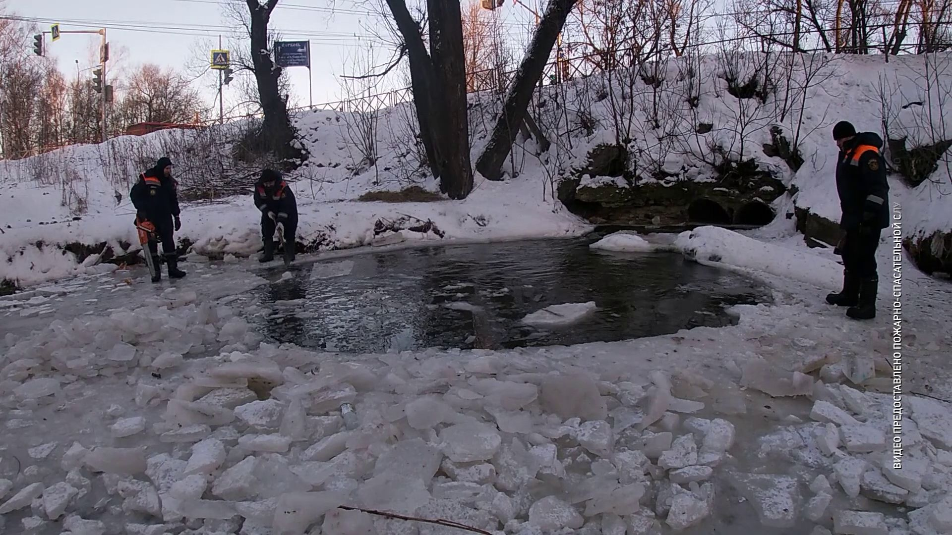 В Ярославле спасатели помогли уткам