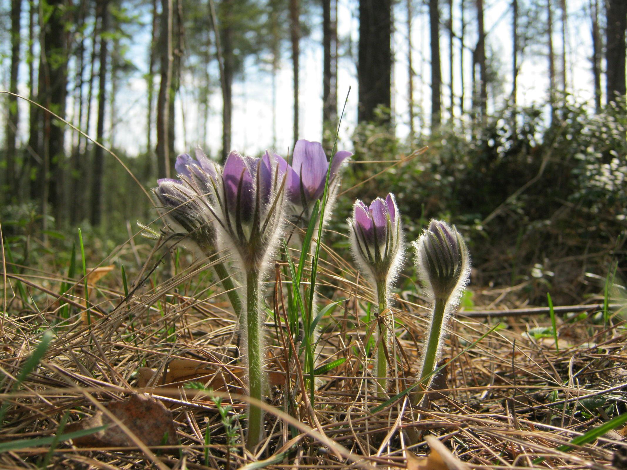 Метеорологи рассказали, когда придет настоящая весна в центральные регионы России