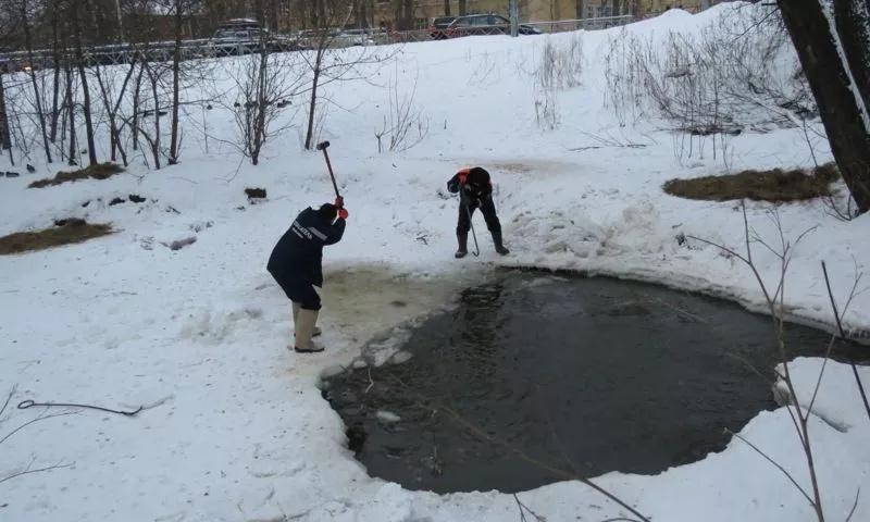 Ярославские спасатели помогают уткам пережить холодную зиму