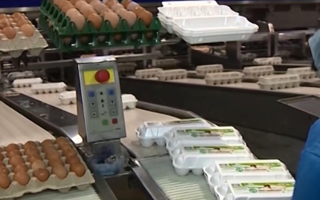 Птицеводы сообщили о желании продавать торговым сетям яйца дороже на десять процентов