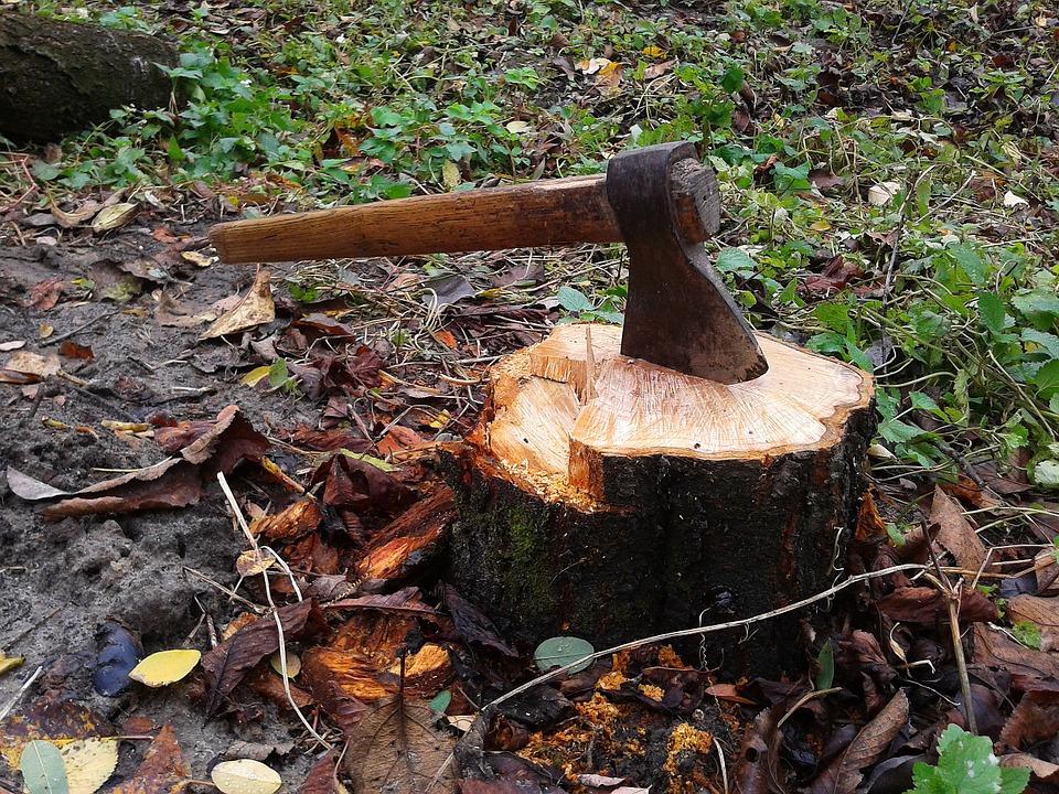 За неполных два месяца года в Ярославской области выявили пять фактов незаконной вырубки леса