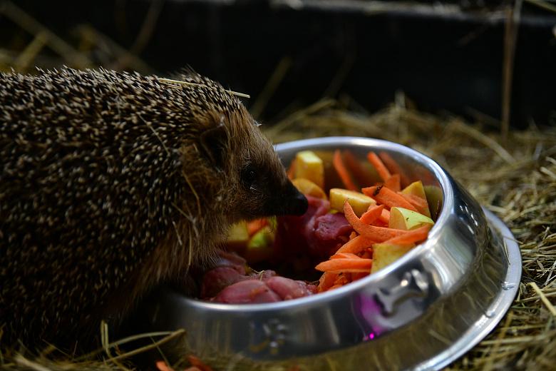 Весна наступает: обитатели Ярославского зоопарка начали выходить из спячки