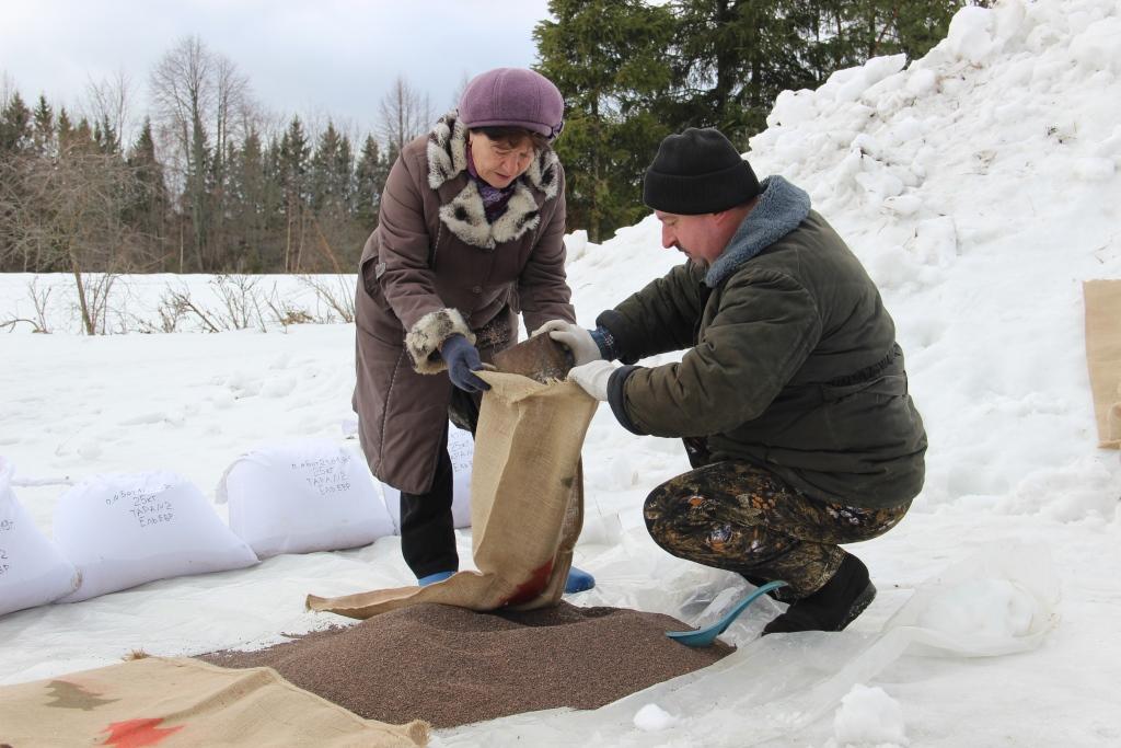 В Ярославской области улучшают качество лесосеменного сырья снегованием