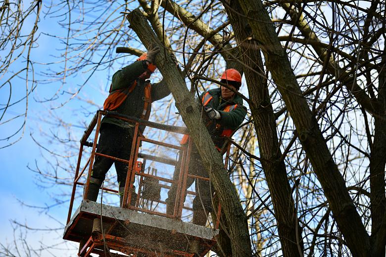 Больше тысячи деревьев опилят этой весной в Ярославле