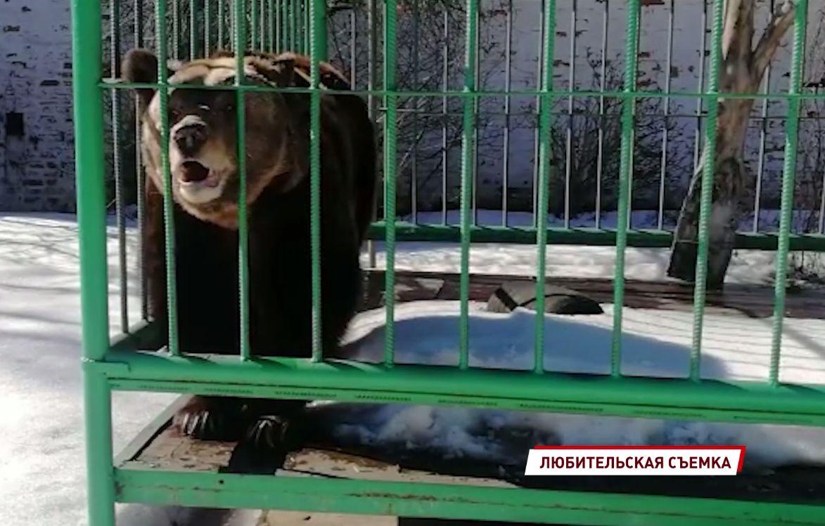 В Ярославском музее-заповеднике проснулась медведица Маша
