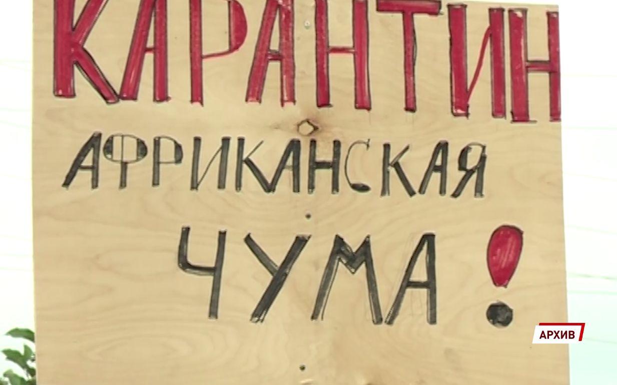 Губернатор Ярославской области ввел карантин из-за африканской чумы свиней