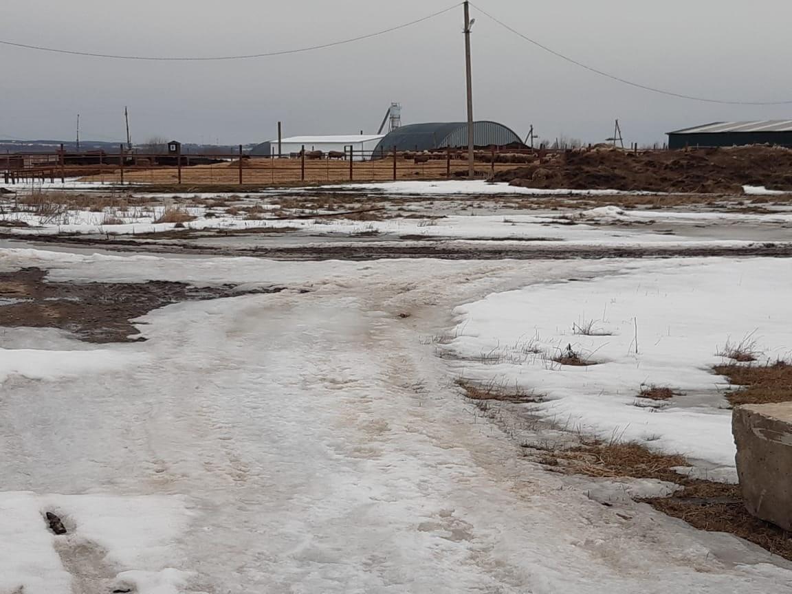 В Ярославской области временно закрыли ферму из-за бруцеллеза у животных