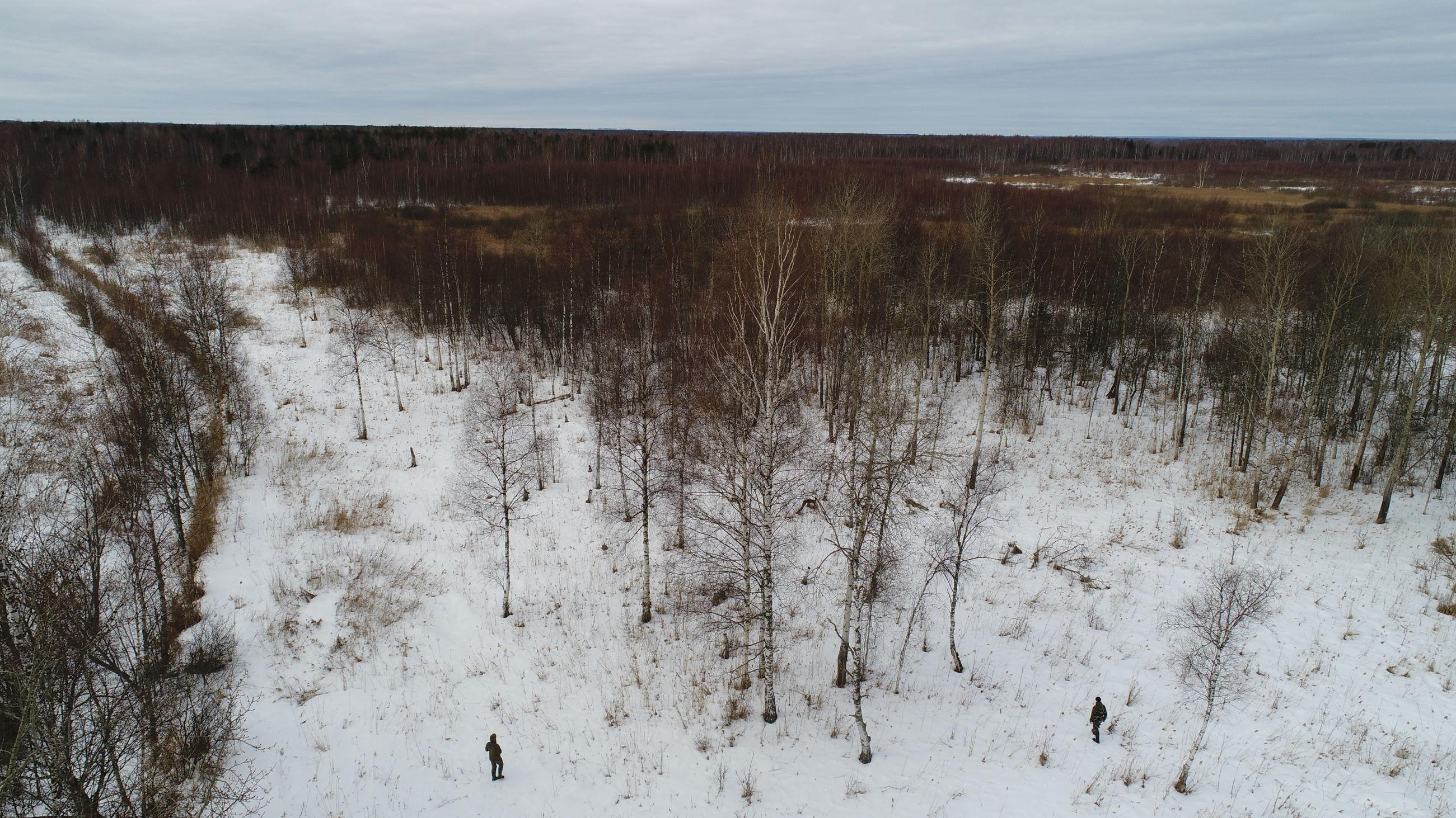 В Ярославле усилили меры по профилактике захода диких животных в черту города