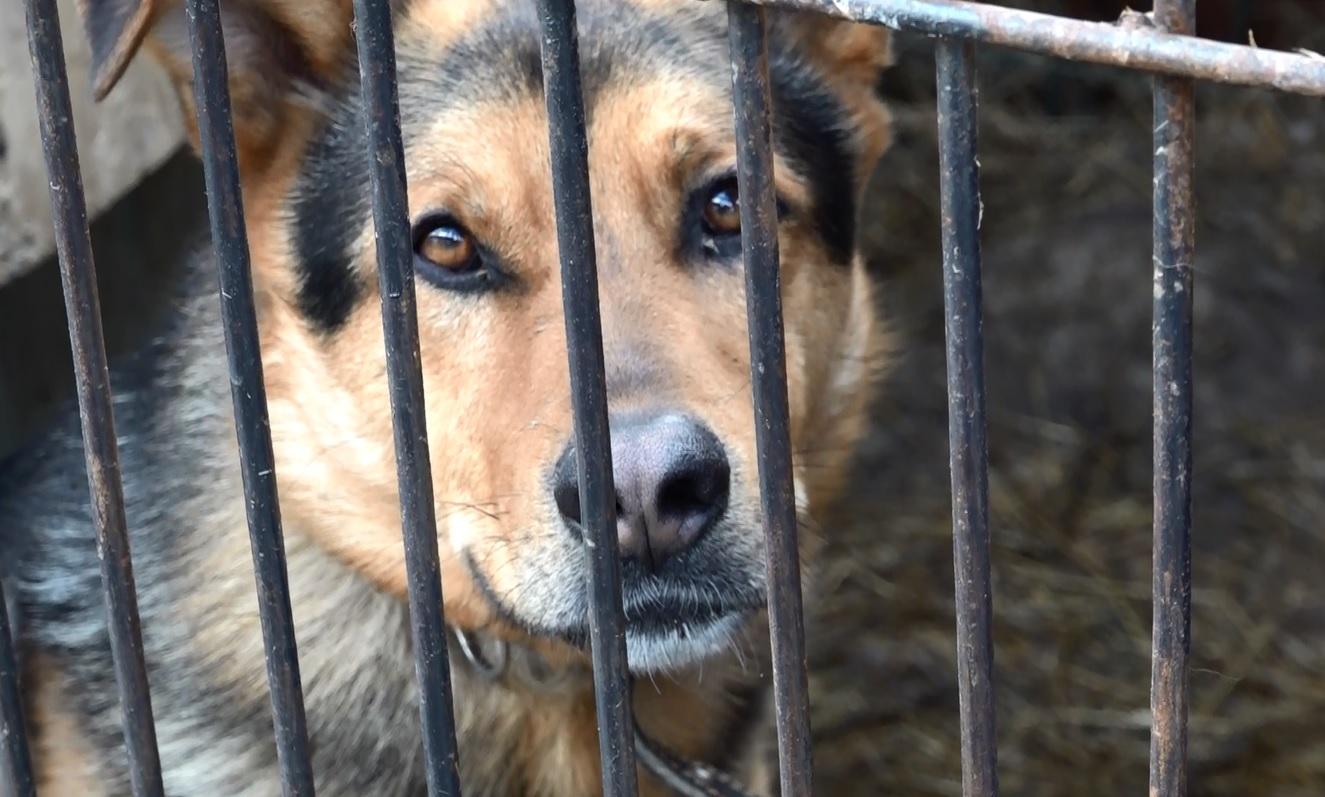 На ярославской набережной скоро может поселиться бронзовая собачка