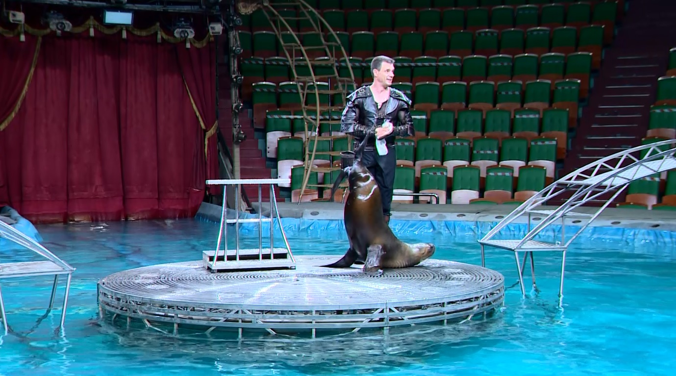 В Ярославском цирке провели открытую репетицию для особенных детей