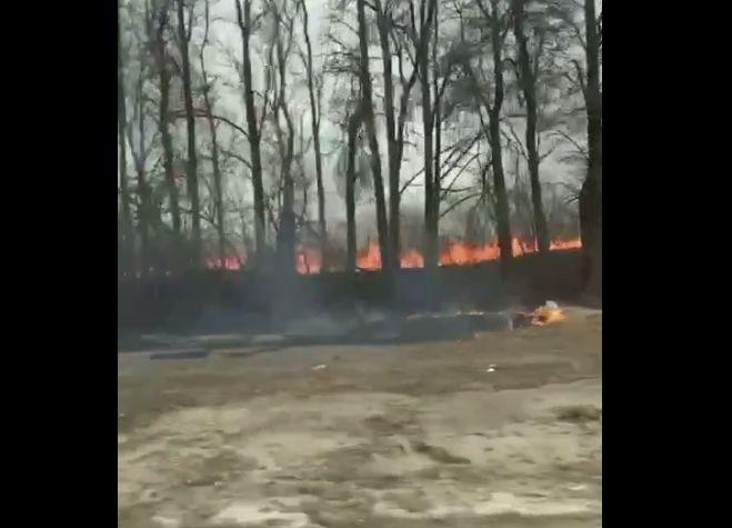 Огненная стена рядом с дорогой: в Ярославской области начались природные пожары