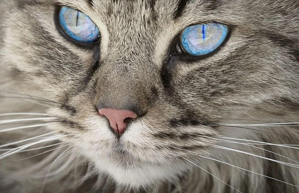 Жительницу Ярославской области могут отправить в колонию за жестокое убийство беременной кошки
