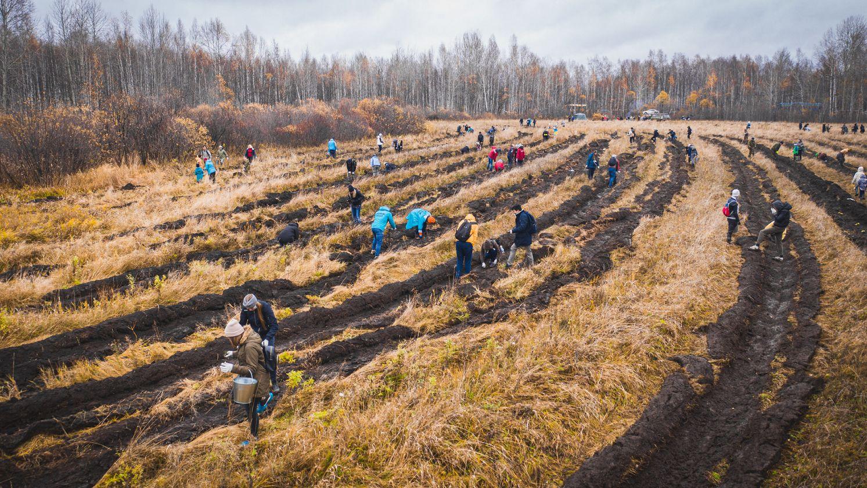 Предприятия Ярославской области смогут погасить свой углеродный след