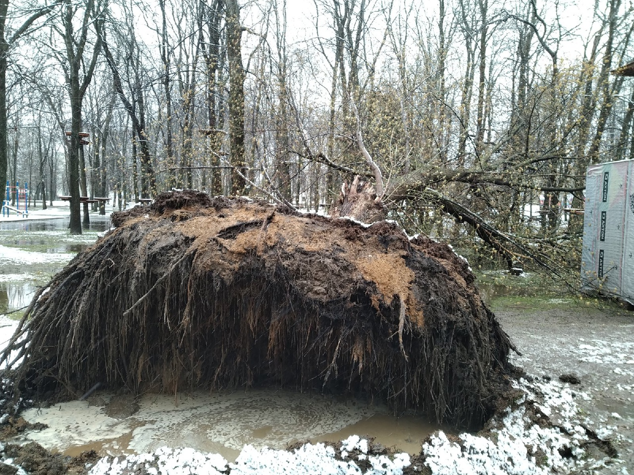Стихия в Ярославской области: ветер повалил дерево в Юбилейном парке