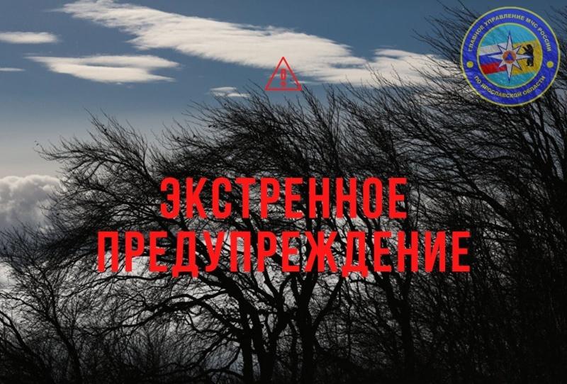 МЧС: до вечера пятницы в Ярославской области ожидается сильный ветер