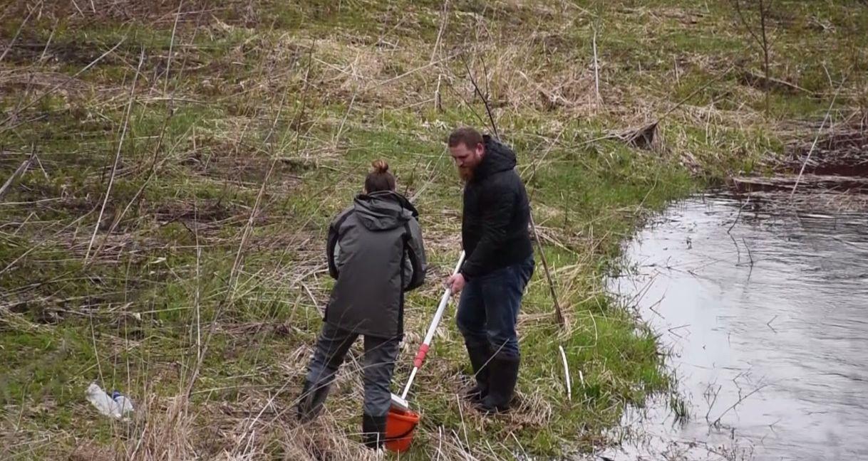 Животноводческое предприятие загрязняет реку под Ярославлем