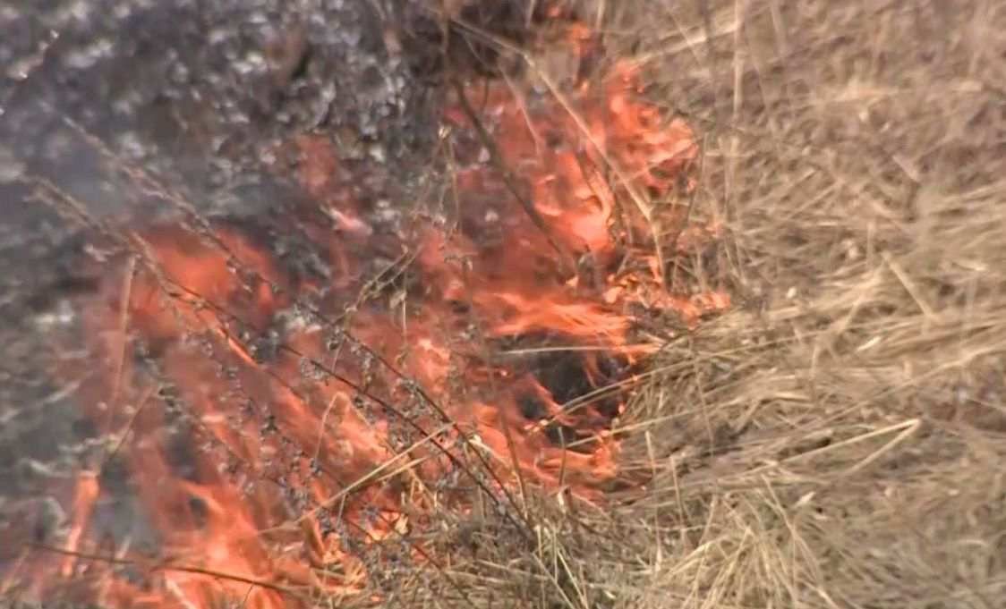 Лесные пожары пришли в Ярославскую область: в двух районах огонь чуть не разошелся на километры