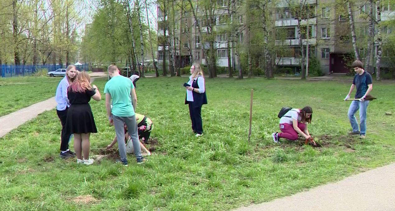 В Ярославле посадили аллею в честь героев Великой Отечественной войны